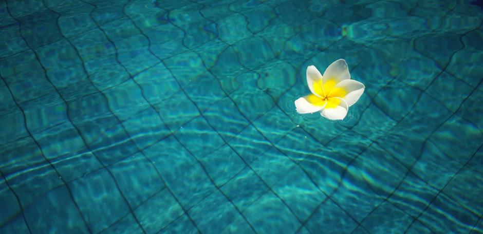 Why You Need Good Software If You Are In The Swimming Pool Business