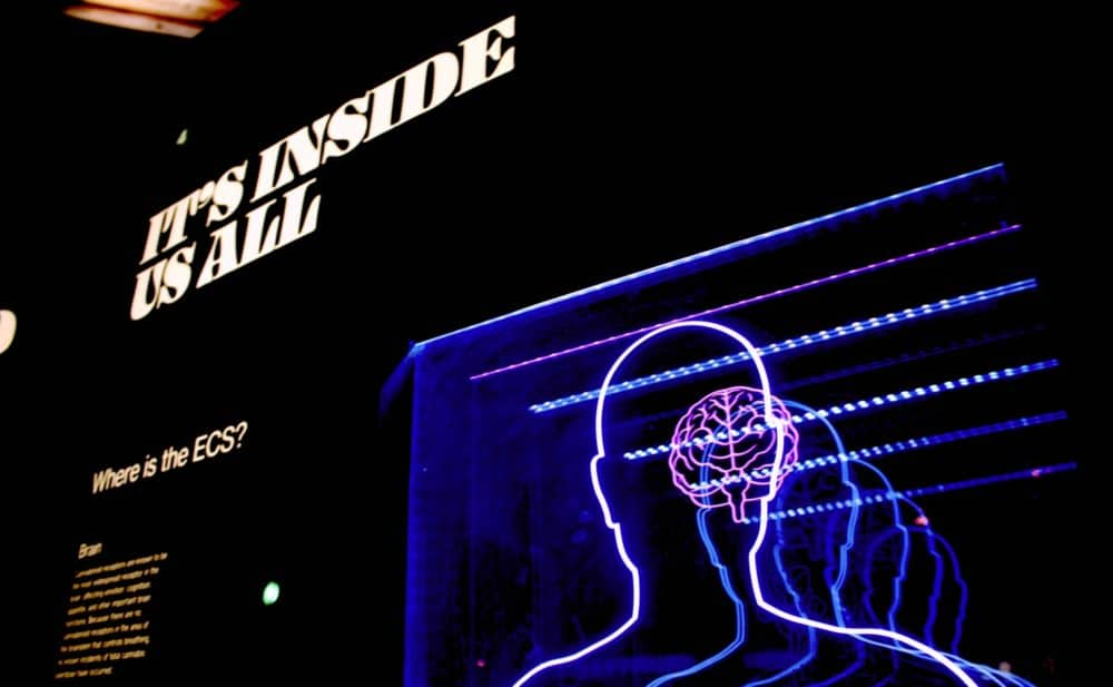 Psychology Theories That Will Help You Improve Branding